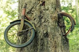 BikeInTree